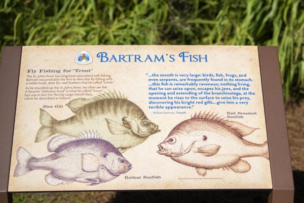 Bartram's fish in Florida